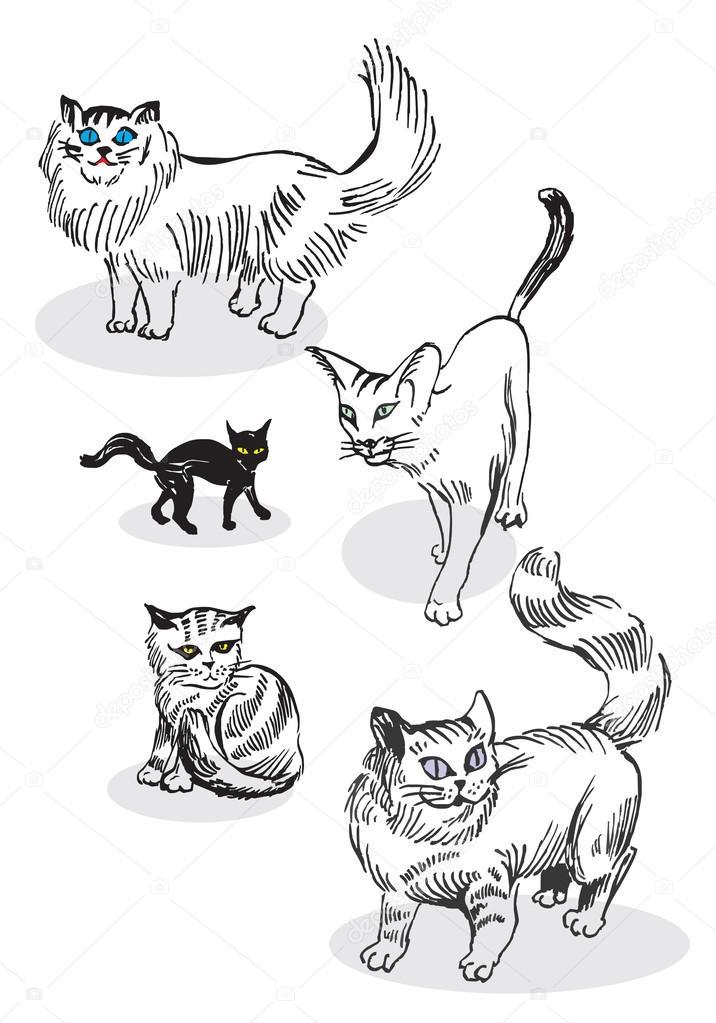 Disegno Di Un Gatto In Bianco E Nero Vettoriali Stock Vellas