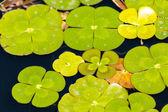 Fotografia giardino dellacqua