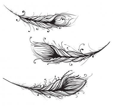 Intricate Decorative Feathers Illustration
