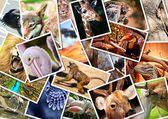 Fotografie koláž různých zvířat