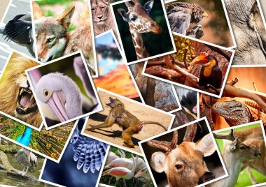 Different animals collage on postcards stock vector