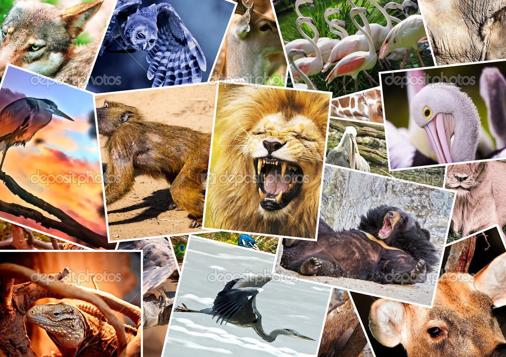 collage de diferentes animales — Foto de stock © DarioStudios #13767642