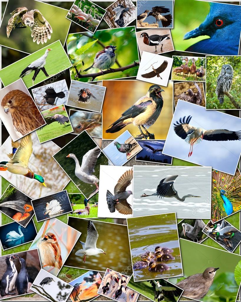 Птицы коллаж московской области