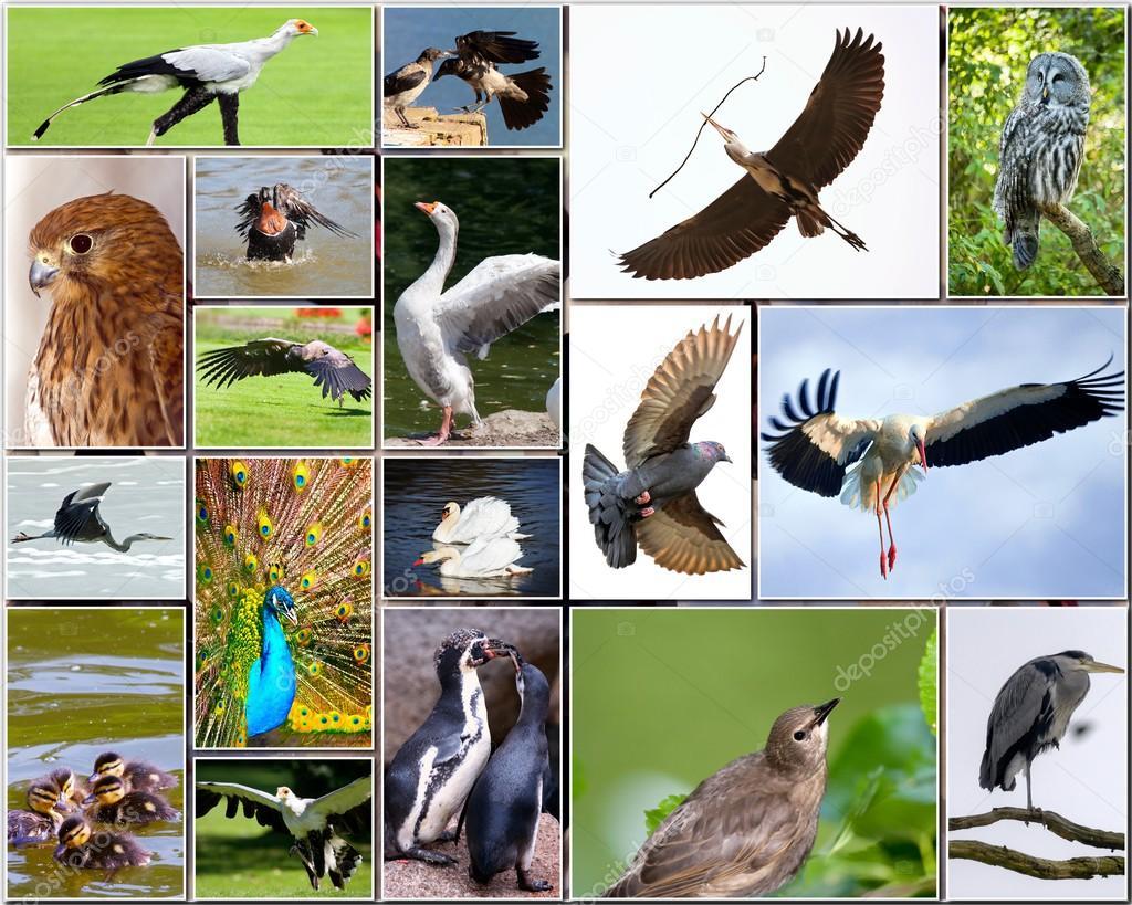 Колаж з птахів — стокове фото