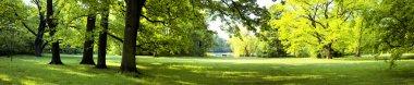 """Картина, постер, плакат, фотообои """"пышные леса постеры цветы фотографии природа"""", артикул 45628527"""