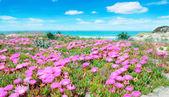 Fotografia fiori rosa e acqua turchese