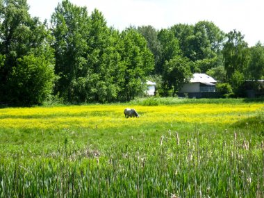 """Картина, постер, плакат, фотообои """"сельский пейзаж с полем и лошадью печать картины"""", артикул 16837805"""