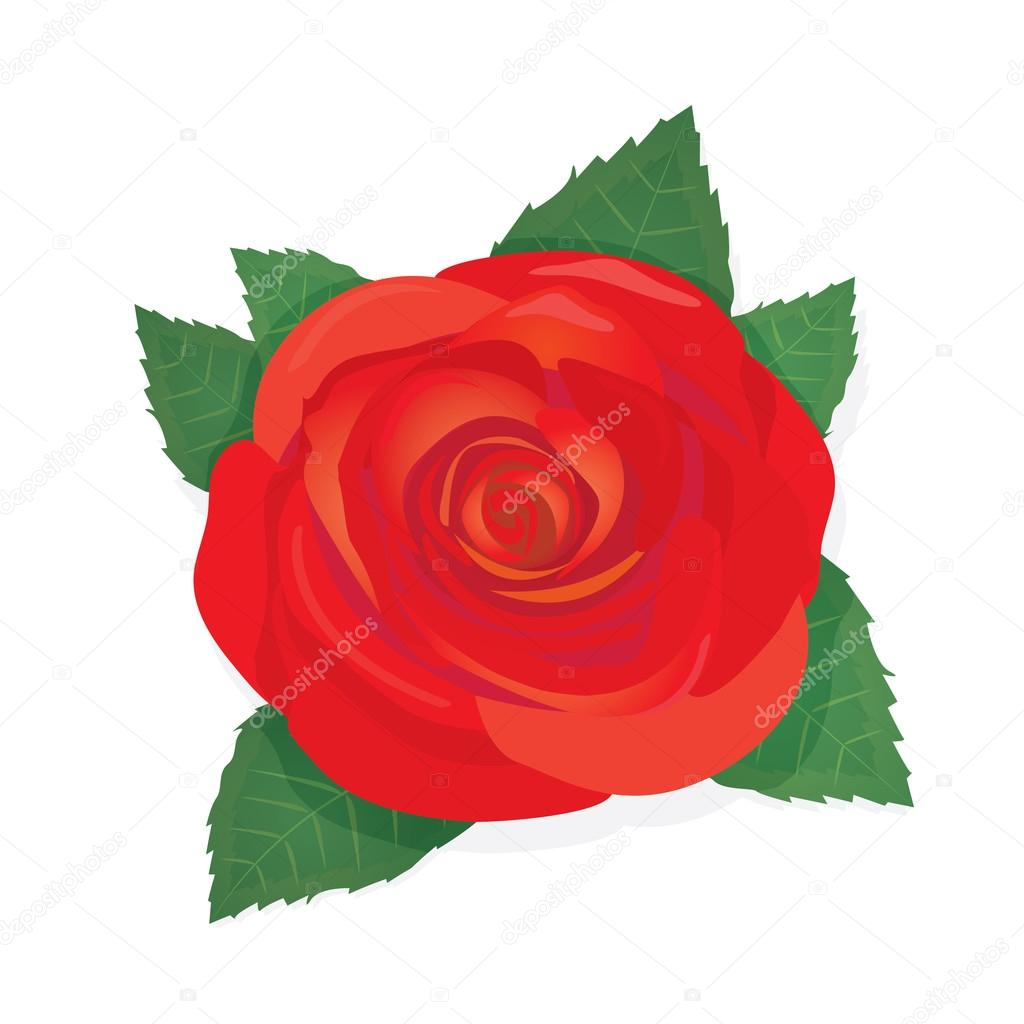 Vector red rose flower background.