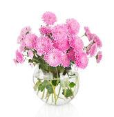 bouquet di fiori di crisantemo bella molti