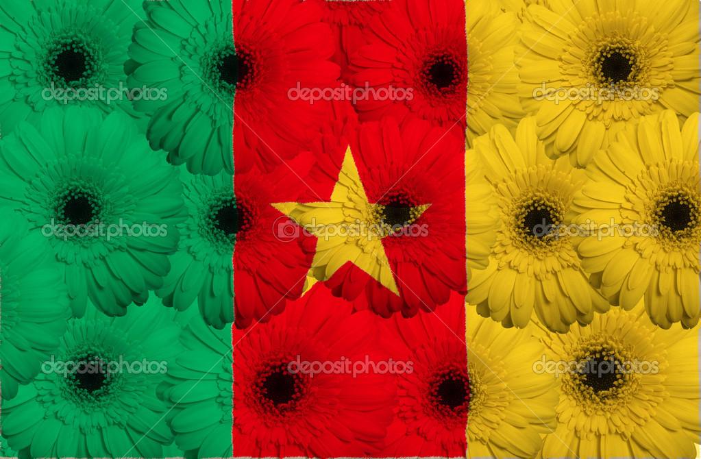 du drapeau national du cameroun avec des fleurs de gerbera — photo