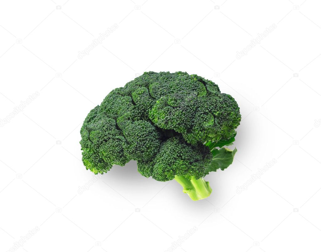 https://st.depositphotos.com/1136122/1629/i/950/depositphotos_16299467-stock-photo-broccoli-shaped-like-brain-isolated.jpg