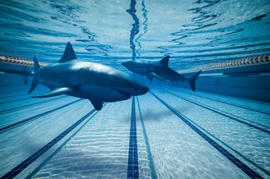 Surreal images of Sharks in swimming pool