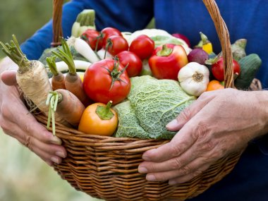 Wicker basket is full of organic vegetables
