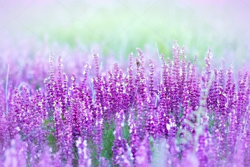 Purple flower in a meadow