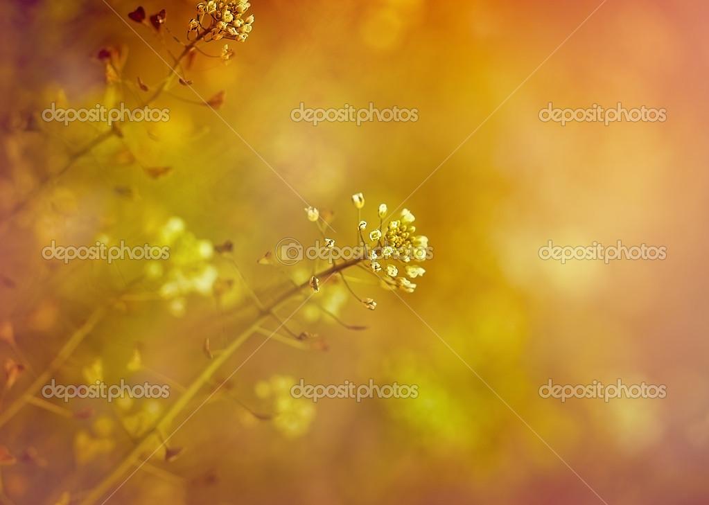 Little white meadow flowers stock photo lola19 50305777 little white meadow flowers stock photo mightylinksfo