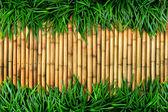 zelené trávy na bambusové pozadí.