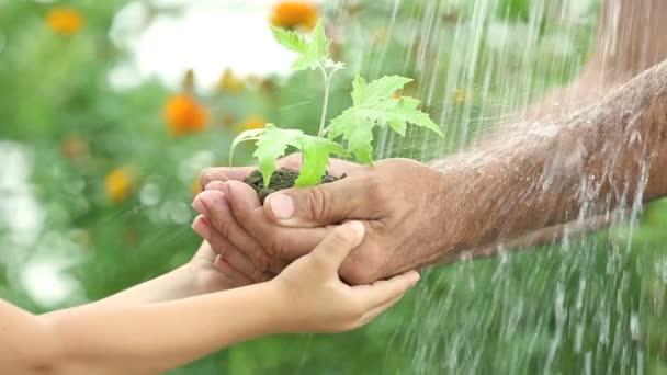 dítě a starší muž ruce mladých rostlin proti jarní zelené pozadí. Ekologie koncept