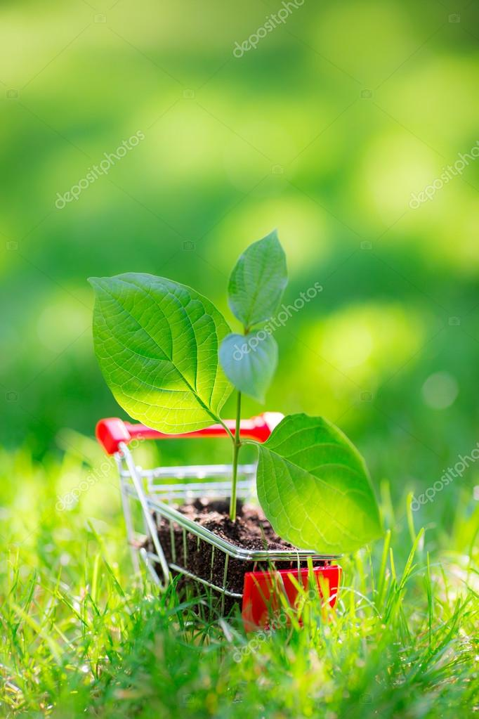 Young plant in shopping cart