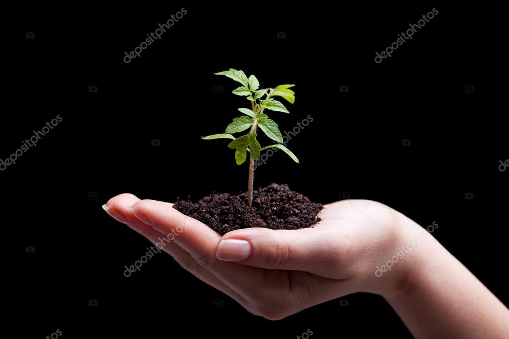 Young plant in woman hand - lit from above