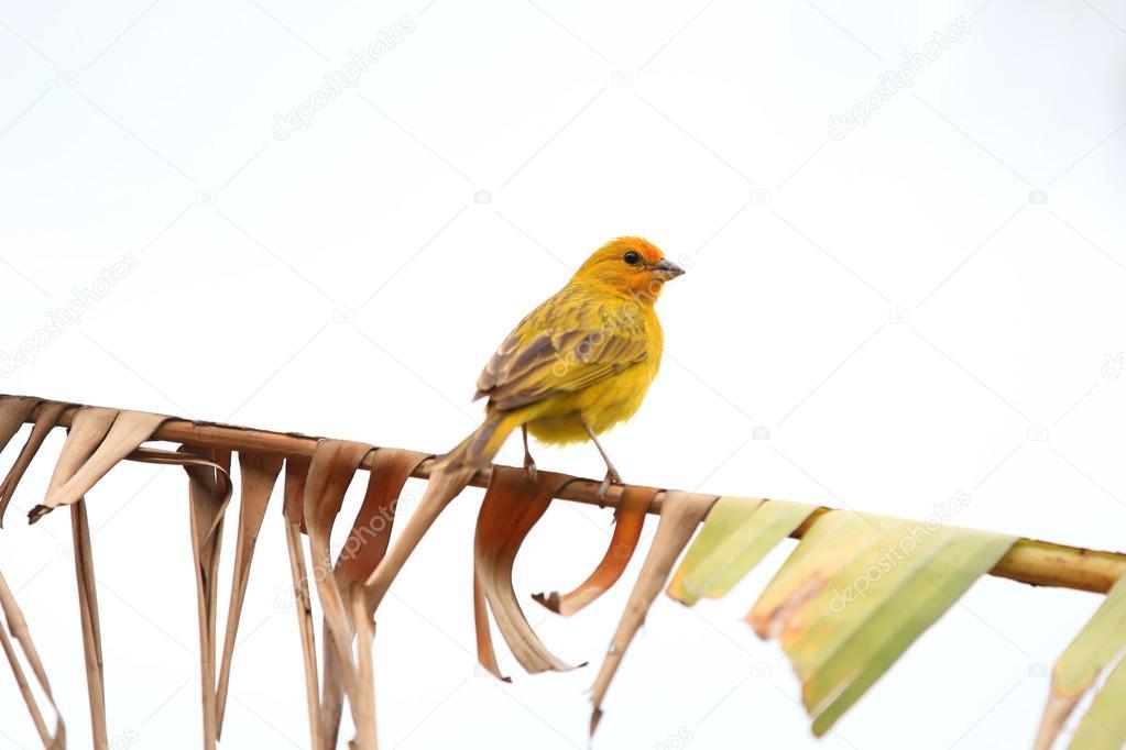 Το μεγαλύτερο πουλί σε ένα μουνί