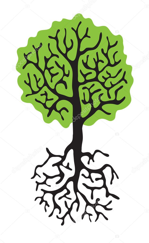 tree with roots isolated white background