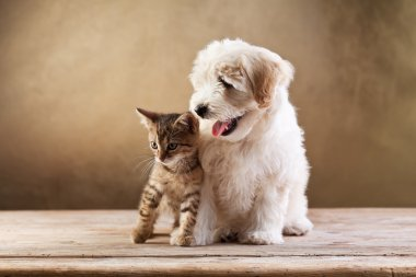 Best friends - kitten and small fluffy dog