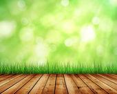 grass and sunlight