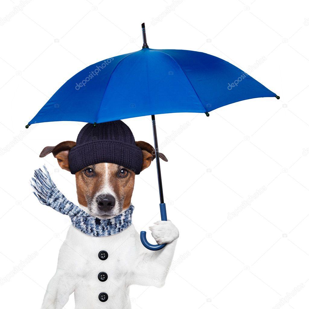 Resultado de imagem para chuva cão