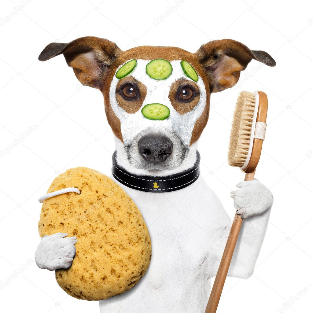 Wellness spa wash sponge dog