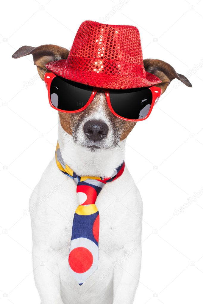 Crazy silly funny dog hat glasses tie