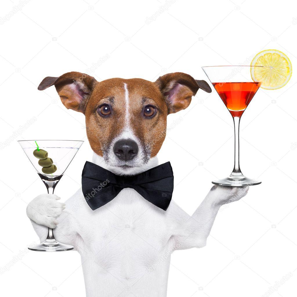 cocktail dog martini glasses