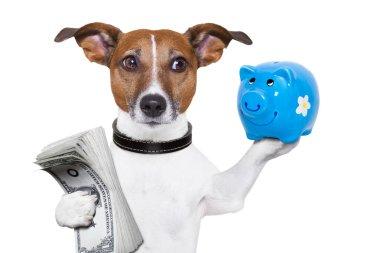 money saving dog