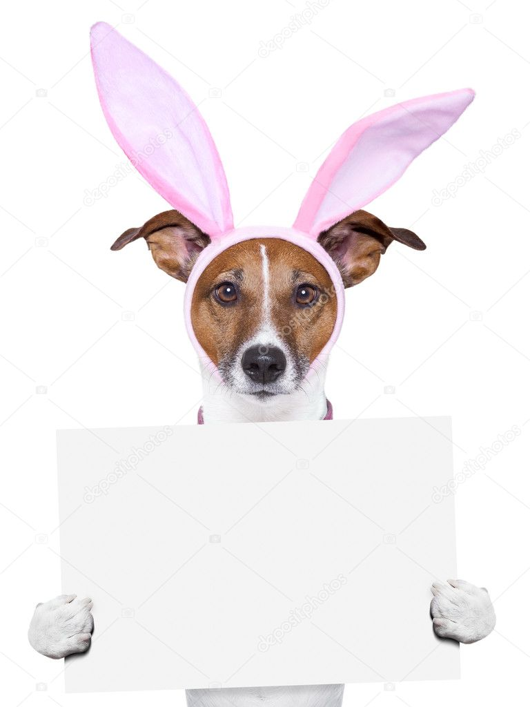 funny easter dog with blank space