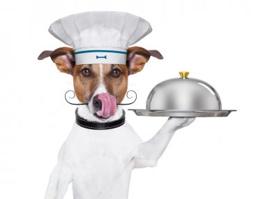 dog cook chef