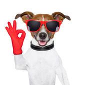 Fotografie ok fingers dog