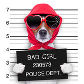 Photo mugshot lady dog