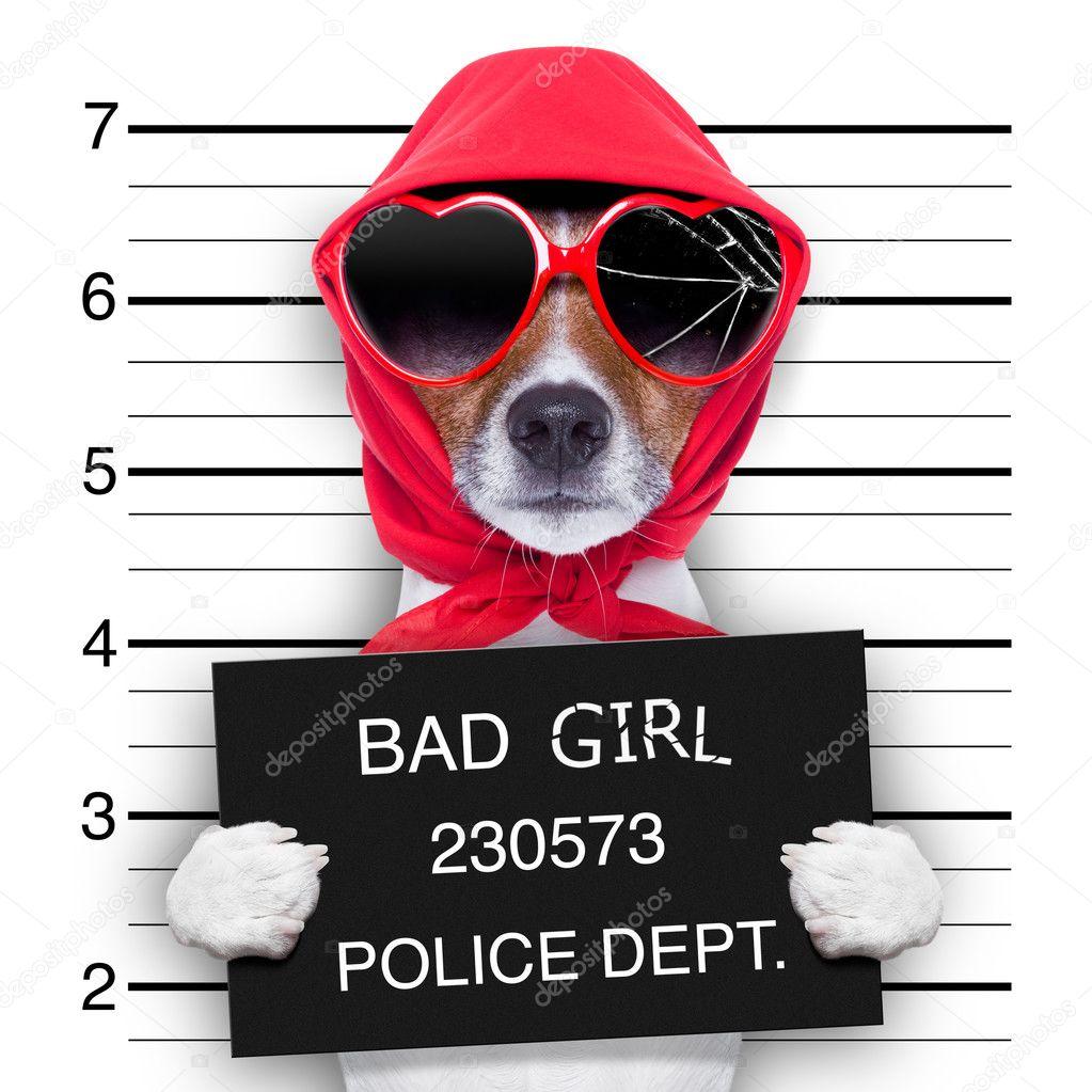 mugshot lady dog