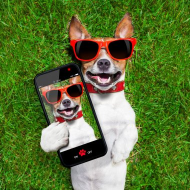 Dog taking a selfie and laughing about that stock vector