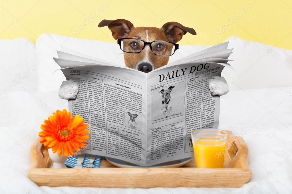 https://st.depositphotos.com/1146092/4815/i/950/depositphotos_48158173-stock-photo-dog-reading-newspaper.jpg