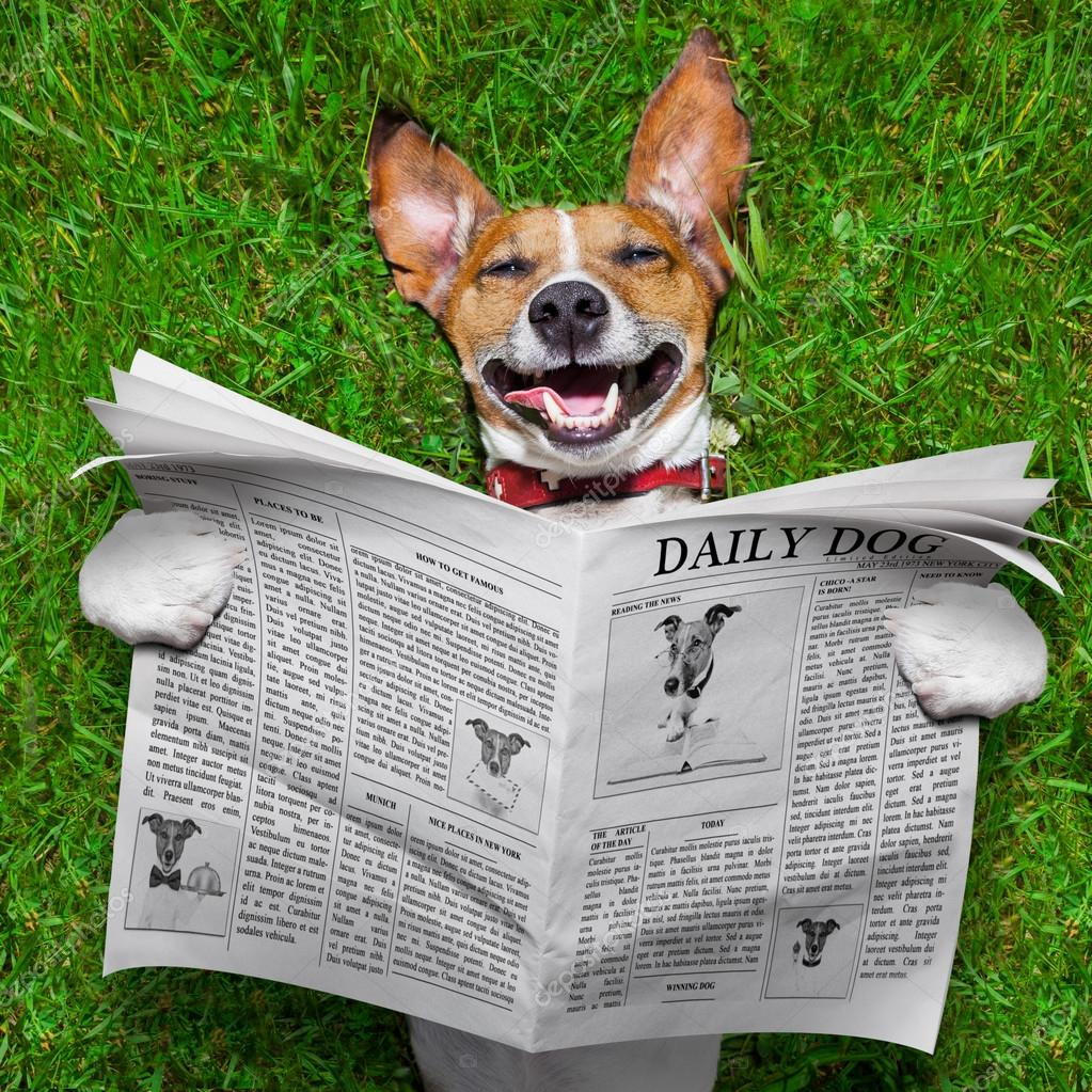 Dog reading newspaper ⬇ Stock Photo, Image by © damedeeso #48171735