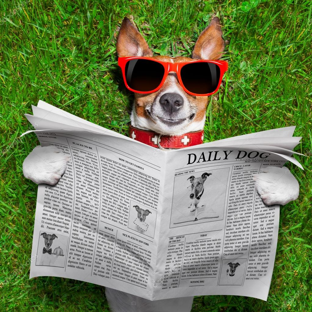 Image result for image, photo, dog and newspaper