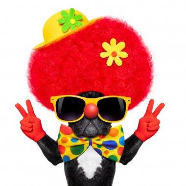 silly clown dog
