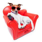 Fényképek kutya tv