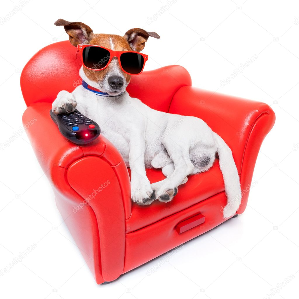 [Obrazek: depositphotos_51184197-stock-photo-dog-tv.jpg]