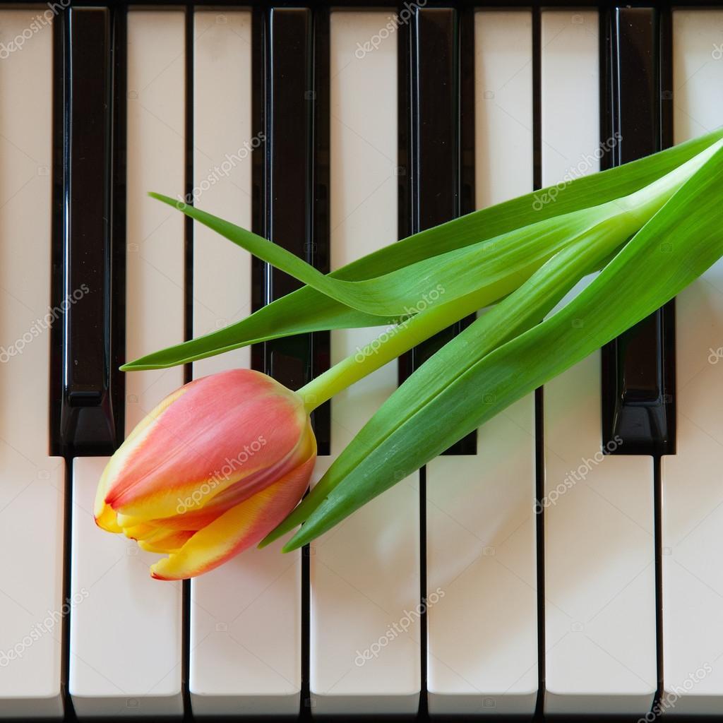 картинки тюльпаны и пианино очень важно, если