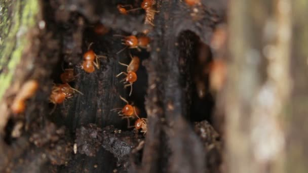 HD Macro of termites on a plank of wood.