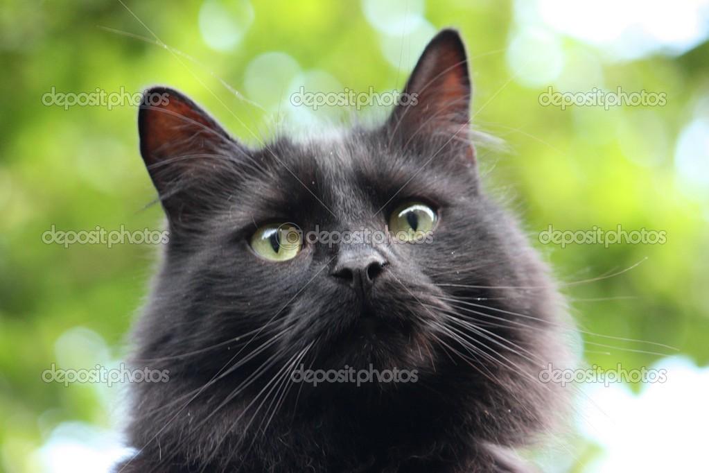 úžasné kočičí vlasy