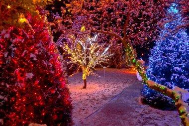Colorful Christmas lights on trees