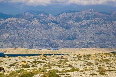Stone desert under Velebit mountain