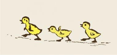 Ducklings illustration